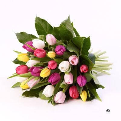 Tulip Sheaf