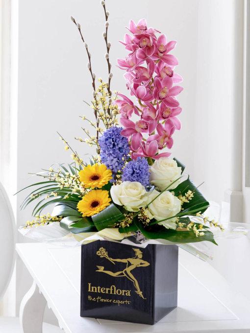 Orchid Sensation Arrangement