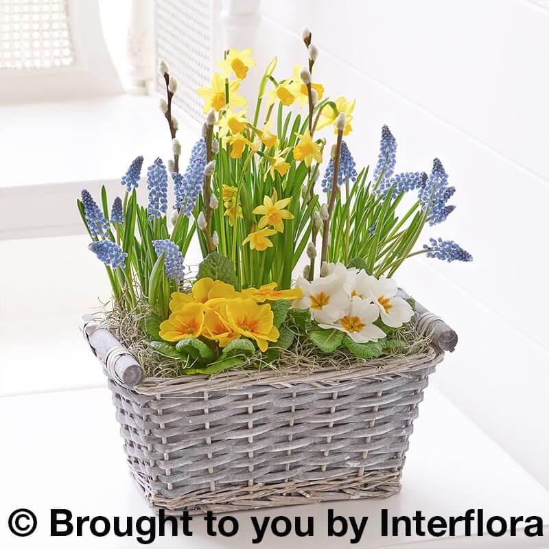Spring cheer planted basket bbl design ecommerce spring cheer planted basket mightylinksfo